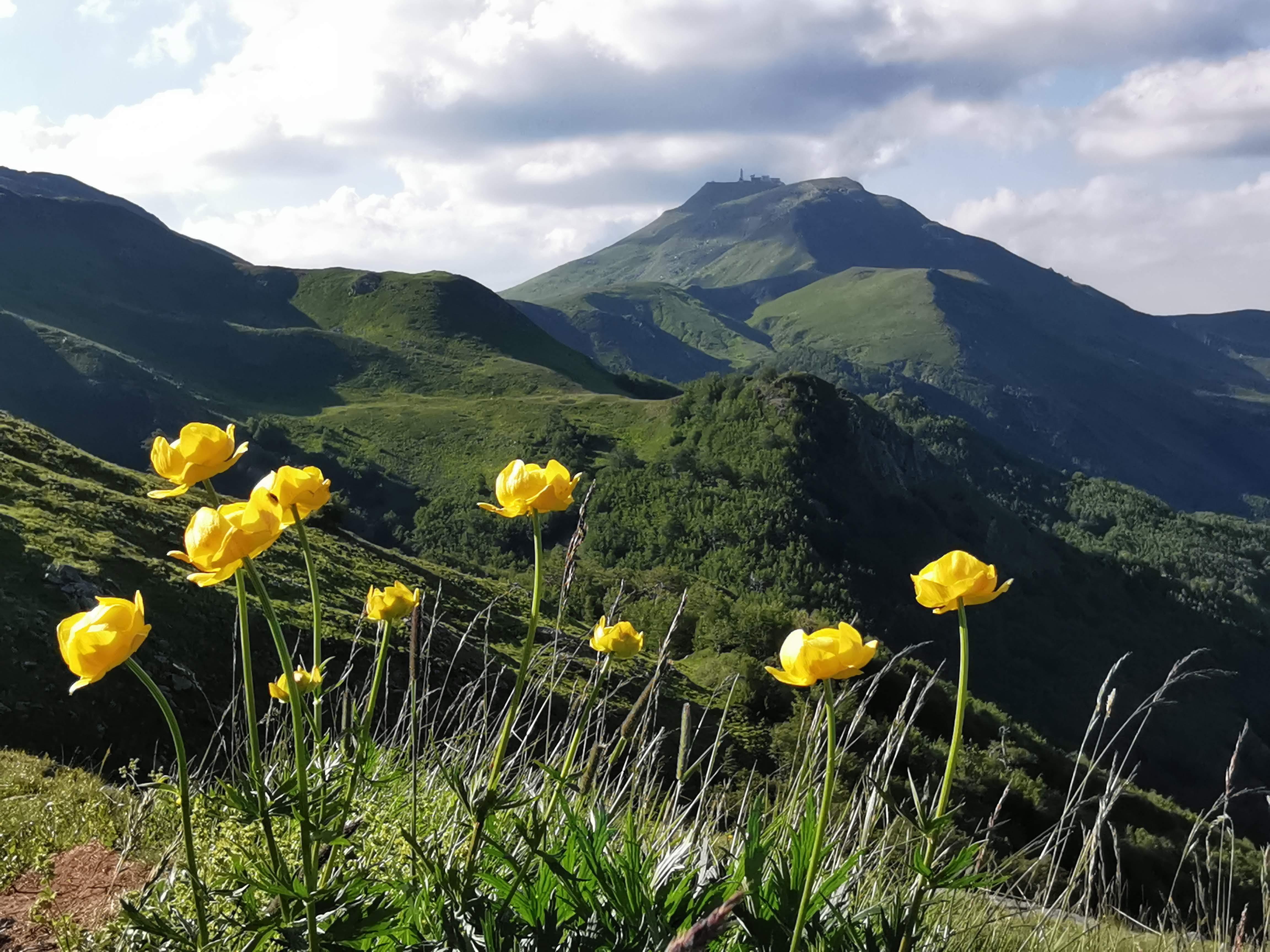fioriture dal libro aperto cimone
