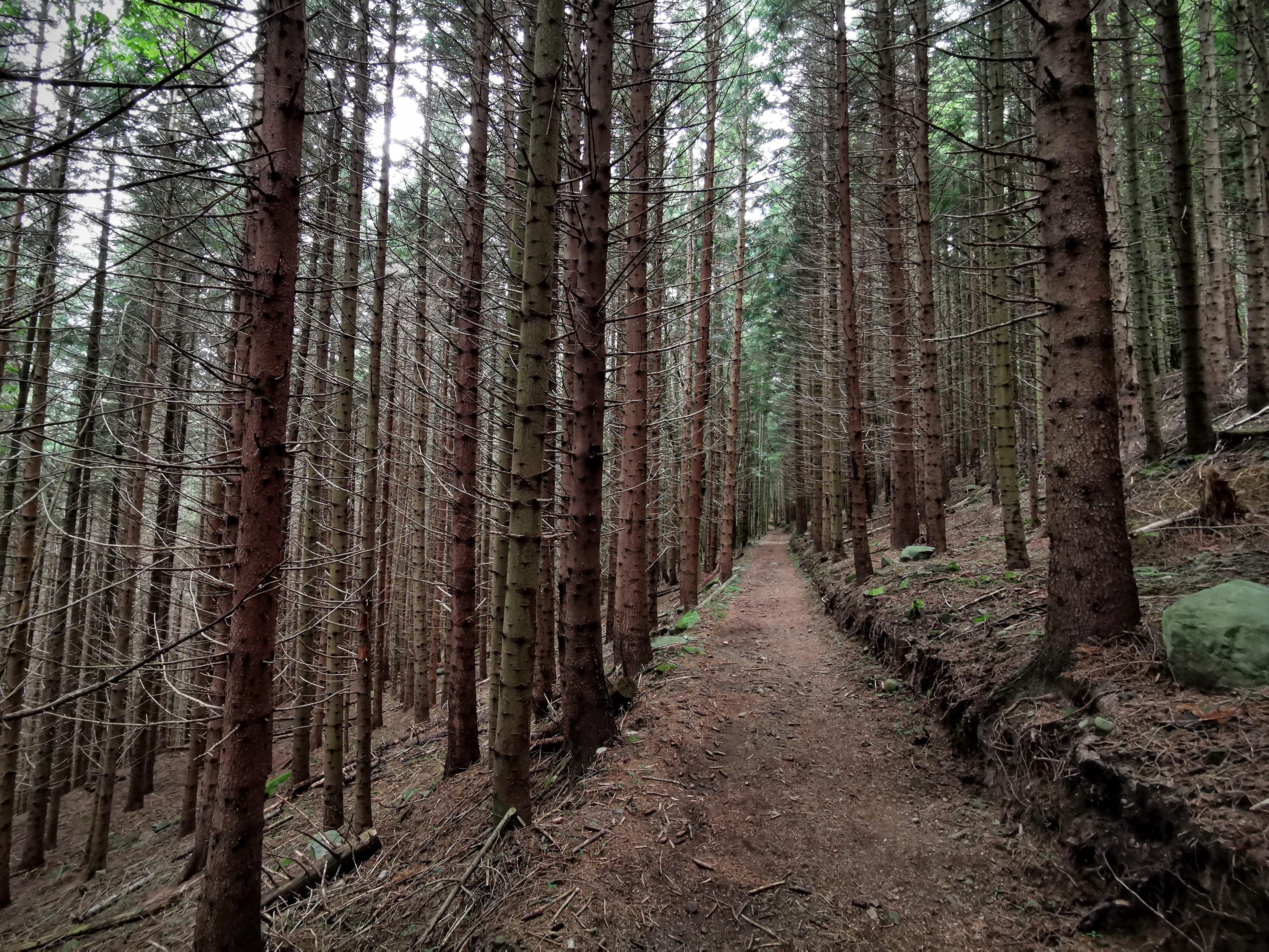 Sentiero delle cascate, antiche mulattiere fra gli abeti